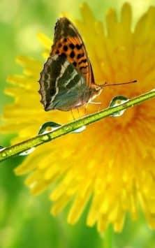 Идеальная природа скриншот 2
