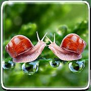 Идеальная природа logo
