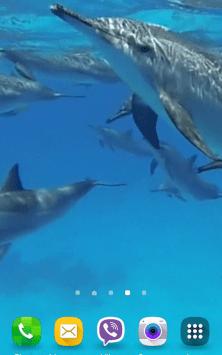 Дельфины со звуком скриншот 2