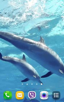 Дельфины со звуком скриншот 3