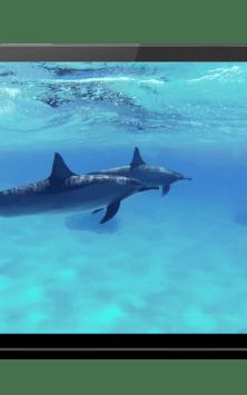Дельфины со звуком скриншот 4