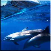 Дельфины со звуком logo