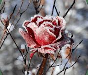 Зимние цветы logo