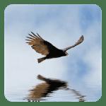 3D Птички Live Wallpaper
