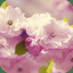 Цветы 3D Live Wallpaper