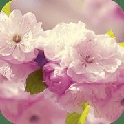 Цветы 3D logo