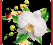 Орхидеи logo