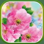 Цветы весной Live Wallpaper