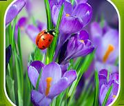 Макро Весна logo