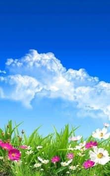 Весенние цветы скриншот 1