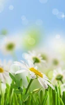 Весенние цветы скриншот 3