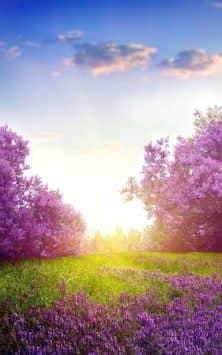 Весенние цветы скриншот 4