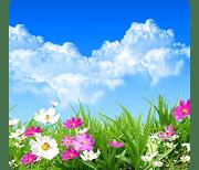 Весенние цветы logo
