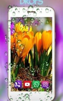 Весенние крокусы скриншот 3