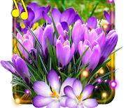 Весенние крокусы logo