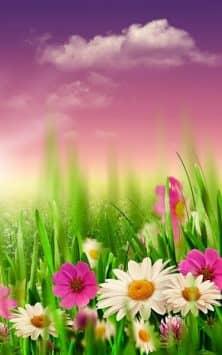 Весенний луг скриншот 3