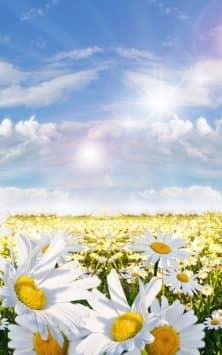 Весенний луг скриншот 4
