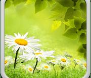 Весенний луг logo
