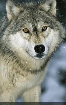 Волки скриншот 4