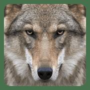 Волки logo