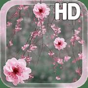 Сакура HD logo