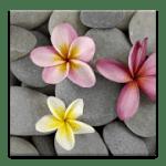 Камни в Воде Live Wallpaper