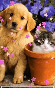 Кошки и собаки скриншот 2