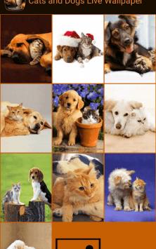 Кошки и собаки скриншот 3