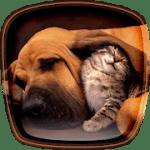 Кошки и собаки живые обои