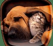 Кошки и собаки logo