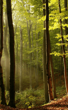 Солнечный Лес (Фоны & Темы) скриншот 1
