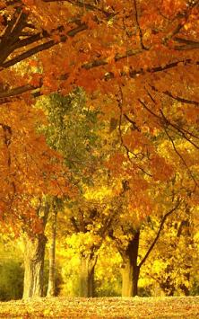 Солнечный Лес (Фоны & Темы) скриншот 3