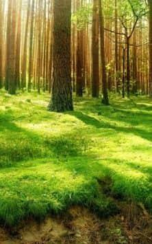 Солнечный Лес (Фоны & Темы) скриншот 4