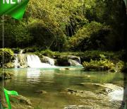 Лесной Ручей logo