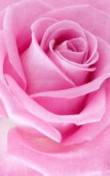 Розовые розы скриншот 4