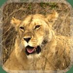 Животные Африки видео обои