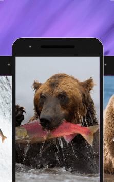 Медведь скриншот 2
