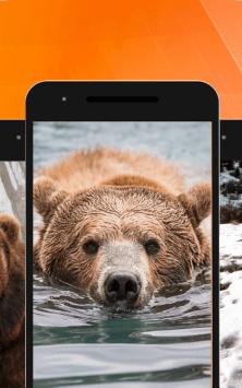 Медведь скриншот 4