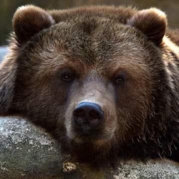 Медведь logo