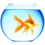 Золотая рыбка живые обои