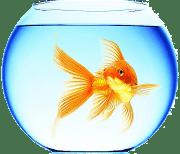 Золотая рыбка logo