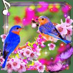 Красивые Птички