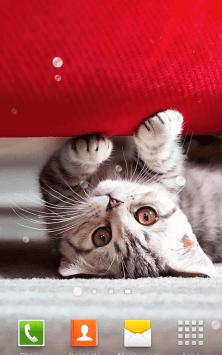 Милые Котята HD скриншот 2