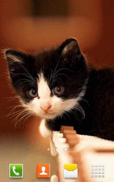 Милые Котята HD скриншот 4