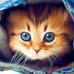 Милые Котята HD Live Wallpaper