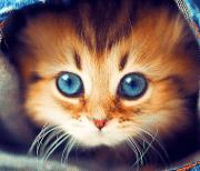 Милые Котята HD logo