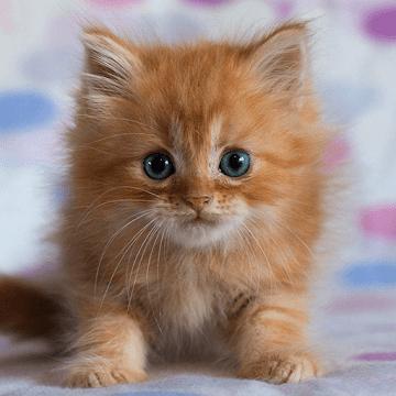 Милые котята logo