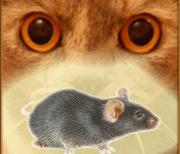 Мышь на экране для кота logo