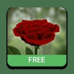 Живые обои Роза 3D