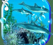 Звуки дельфинов logo